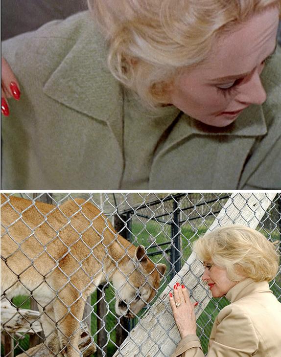 Les Oiseaux (Alfred Hitchcock, 1960) / Tippi Hedren et un cougar (Bill Dow).