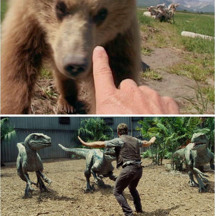 Grizzly man / Jurassic world (Colin Trevorrow, 2015).