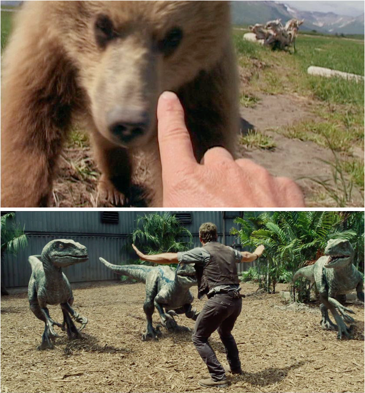 Grizzly man / Jurassic world (Colin Trevorrow, 2015).