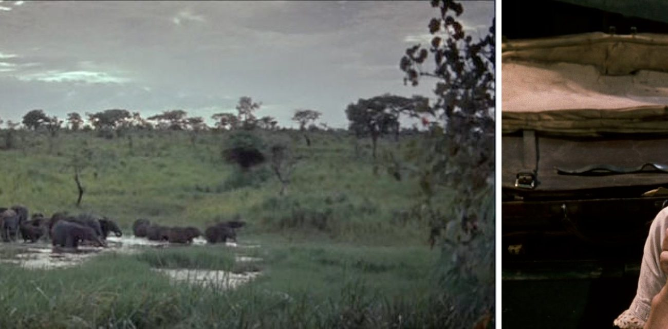 Les Moissons du ciel (John Huston ) / African queen.