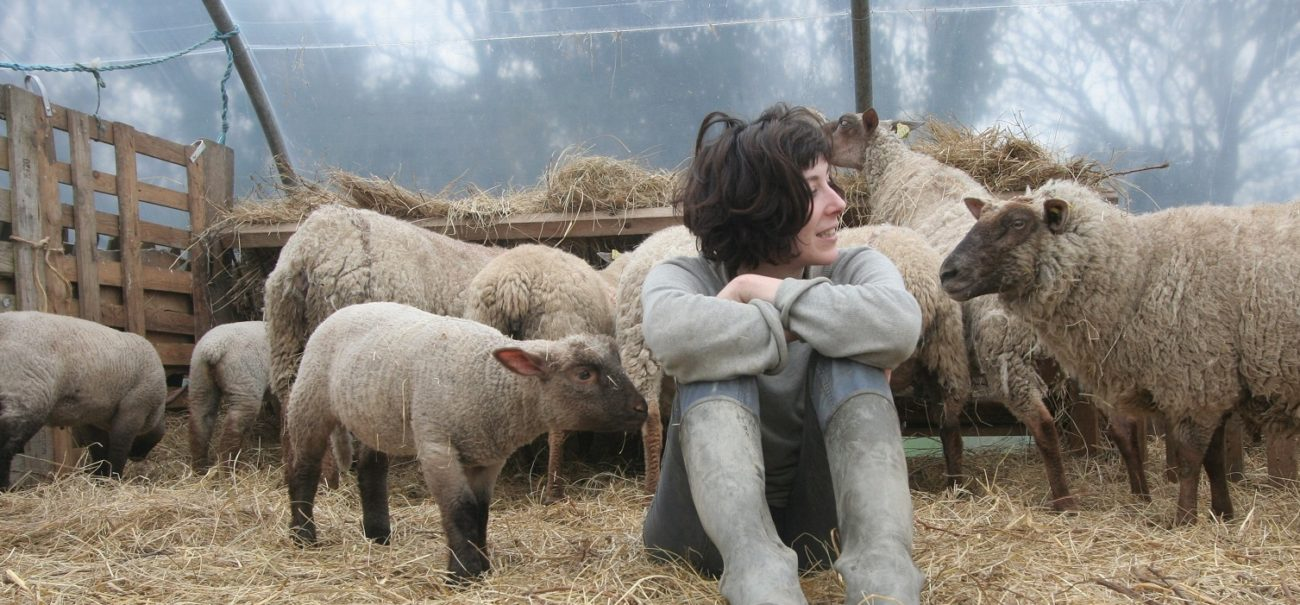 guerre des moutons